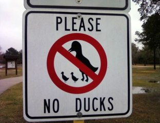 no-ducks-sign