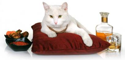 rich-cat-with-food-scotch3